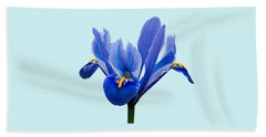 Iris Reticulata Blue Background Beach Towel