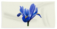 Iris Reticulata, Cream Background Beach Towel