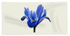 Iris Reticulata, Cream Background Beach Towel by Paul Gulliver