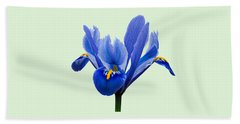Iris Reticulata, Green Background Beach Towel