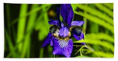 Beach Towel featuring the photograph Iris Versicolor by Mark Myhaver