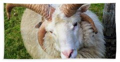 Islandic Sheep With Two Sets Of Horns Beach Towel by Allan Levin