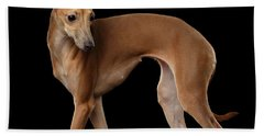 Italian Greyhound Dog Standing  Isolated Beach Sheet by Sergey Taran