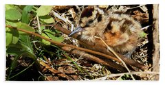 It's A Baby Woodcock Beach Towel by Asbed Iskedjian