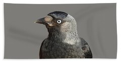 Jackdaw Corvus Monedula Bird Portrait Vector Beach Towel