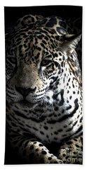 Jaguar Beach Sheet