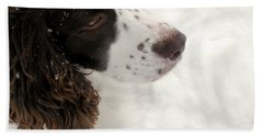 January Spaniel - English Springer Spaniel Beach Towel by Angie Rea