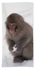 Beach Towel featuring the photograph Japanese Macaque Macaca Fuscata Baby by Konrad Wothe