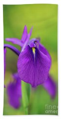 Japanese Water Iris Flower Beach Towel