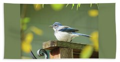 Scrub Jay On A Fence - Images From The Fall Garden Beach Towel by Brooks Garten Hauschild