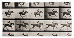 Horse Beach Sheets