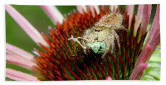 Jumping Spider With Green Weevil Snack Beach Towel