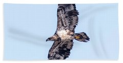 Beach Sheet featuring the photograph Juvenile Bald Eagle 2017 by Ricky L Jones