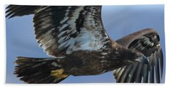 Beach Towel featuring the photograph Juvenile Bald Eagle by Coby Cooper
