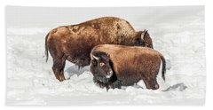 Juvenile Bison With Adult Bison Beach Towel