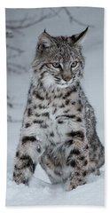 Juvenile Bobcat In The Snow Beach Sheet