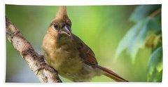 Juvenile Northern Cardinal Beach Sheet