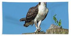 Juvenile Osprey#1 Beach Towel by Geraldine DeBoer