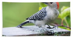 Beach Towel featuring the photograph Juvenile Red-bellied Woodpecker In The Rain by Ricky L Jones