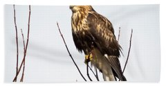 Juvenile Rough-legged Hawk  Beach Towel