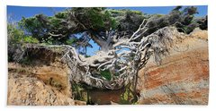 Kalaloch Tree Of Life Beach Towel