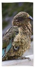 Kea Bird Beach Sheet by Sally Weigand