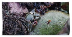Kelp Crab Beach Towel