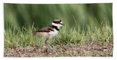 Killdeer - 24 Hours Old Beach Sheet by Travis Truelove