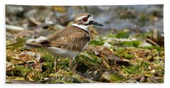 Beach Towel featuring the photograph Killdeer At The Coast by Sue Harper