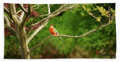 King Parrot Beach Towel by Cassandra Buckley