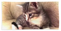 Kitten Deep In Thought Beach Towel
