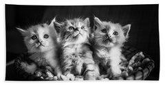 Kitten Trio Beach Towel