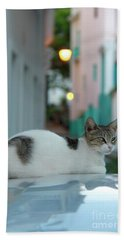Kitten Reflections Beach Towel