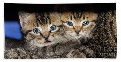 Kittens In The Shadow Beach Towel