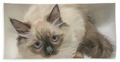Kitty Blue Eyes Beach Sheet