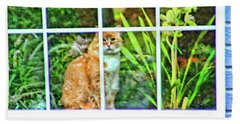 Beach Towel featuring the photograph Kitty Reflections by Wendy McKennon
