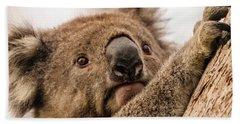 Koala 3 Beach Sheet by Werner Padarin
