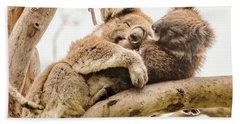 Koala 5 Beach Sheet by Werner Padarin