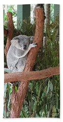 Koala Beach Sheet