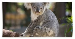 Koala In Tree Beach Towel by Jamie Pham