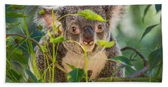 Koala Leaves Beach Towel by Jamie Pham