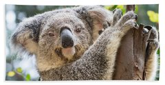 Koala On Tree Beach Sheet by Jamie Pham