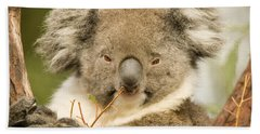 Koala Snack Beach Towel by Mike  Dawson