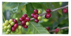 Beach Towel featuring the photograph Kona Coffee Cherries by Susan Rissi Tregoning