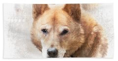 Korean Jindo Portrait Beach Sheet by Eleanor Abramson