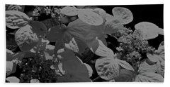 Lace Cap Hydrangea In Black And White Beach Towel
