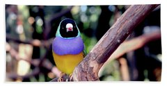 Lady Gouldian Finch Beach Towel by Haleh Mahbod