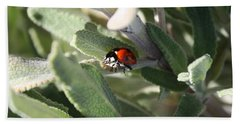 Ladybug And Sage Leaves Beach Towel by Carol Groenen