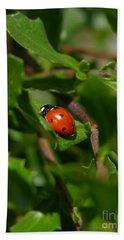Ladybug Beach Sheet by Carol Groenen
