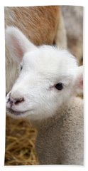 Beach Towel featuring the photograph Lamb by Michelle Calkins